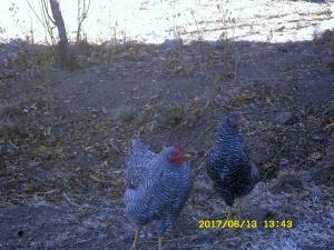 Erstes Treffen der Hühner-AG :-)