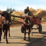 Land- & Subsistenzwirtschaft