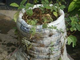 Anleitung zum Anlegen eines Sackgartens