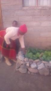 Unser Obst und Gemüse wächst ...